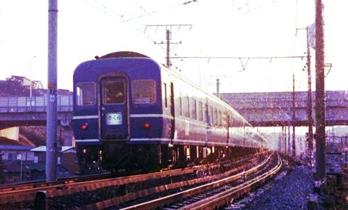 19750310-Sakura